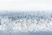 A brief sunray on cloudy day over snowy forest tundra, Saariselkä, Finland Ⓒ Davis Ulands | davisulands.com