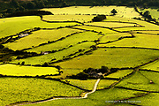 Farm and lane within rolling farmland and fields of sheep on the Llyn Peninsula at this most Westerly tip of North Wales.