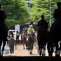 (PPAGE1) Oceanport 5/14/2005 The horses are lead onto the tack during opening day at Monmouth Park.     Michael J. Treola Staff Photographer....MJT