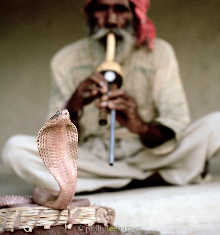 Snake charmer at Gandhi Nager, Lucknow, Uttar Pradesh, India