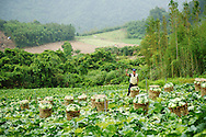 This nice farmer gave us three heads of cabbage at the end of our hike.  Jialuo Lake, May, 2013