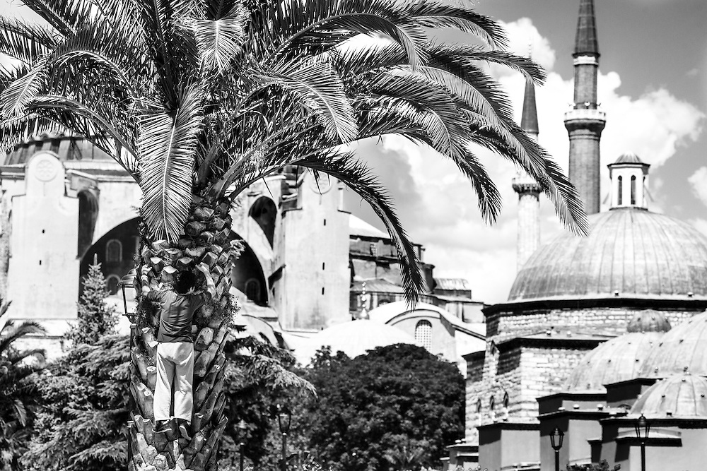 A young boy climbs to a palm-tree at Sultan Ahmet park, just in front of Hagia Sophia, in Istanbul.