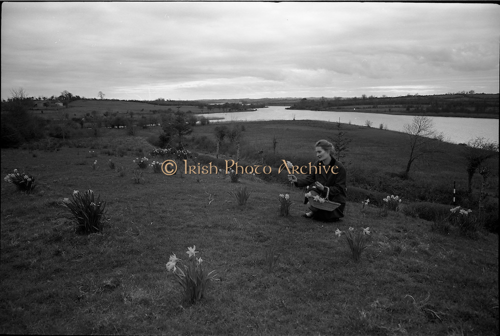 06-10/04/1964.04/06-10/1964.06-10 April 1964.Views on the River Shannon. Catholics used to attend mass on a rock beneath an Oak during Penal times. The fallen oak lies beside the spot now marked by a pine on a mound of daffodils. Miss Tessa Doyle keeps the shrine in tidy order for the tourit visiting her home at Ardnaffrin, near Jamestown bridge, Co. Leitrim