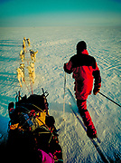 Norwegian skier uses Nordic skis to travel beside his dog team, one of three that crossed the Greenland icecap from East to West along the Arctic Circle.