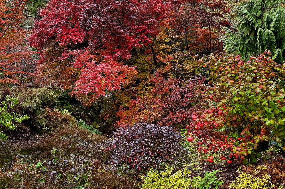 Asticuou Gardens in autumn, Northeast Harbor, Mount Desert Island, Maine, USA