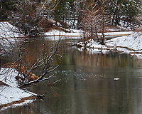 Pair of Common Mergansers. Image taken with a Nikon D3s camera and 70-200 mm f/2.8 lens (ISO 200, 200 mm, f/11, 1/60 sec).