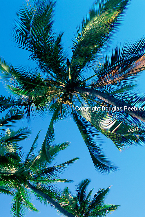 Palm Trees<br />