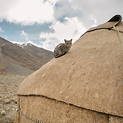 """Cat on yurt roof. Camp at a Wakhi high pasture names """"Warm"""", below Garumdee Pass. Guiding and photographing Paul Salopek while trekking with 2 donkeys across the """"Roof of the World"""", through the Afghan Pamir and Hindukush mountains, into Pakistan and the Karakoram mountains of the Greater Western Himalaya."""