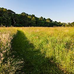 A mowed trail in the hay field at Phillips Farm in Marshfield, Massachusetts.