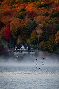 Ducks flying over a misty Harveys Lake on an October Morning, by Darren Elias