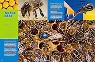 Publication: RANGER RICK MAGAZINE (USA), June 2008, Photography by Heidi & Hans-Juergen Koch/animal-affairs.com