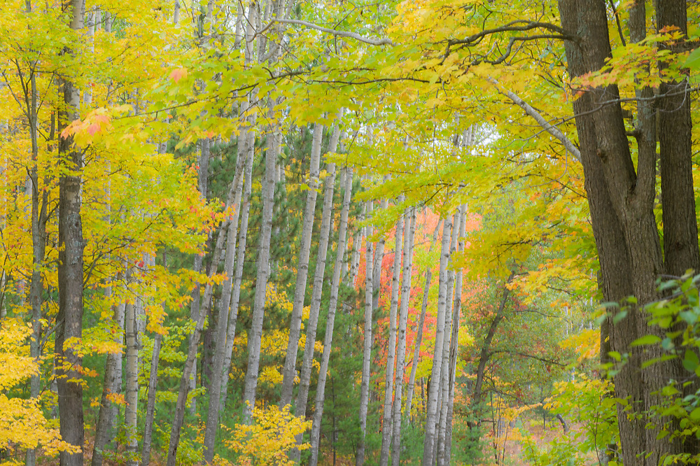 Autumn forest, October, Crawford County, Michigan, USA