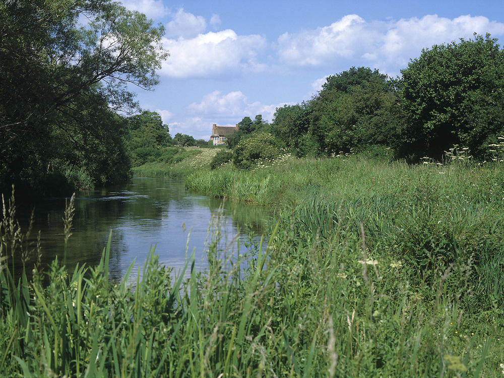 WATER MEADOW ON RIVER TEST