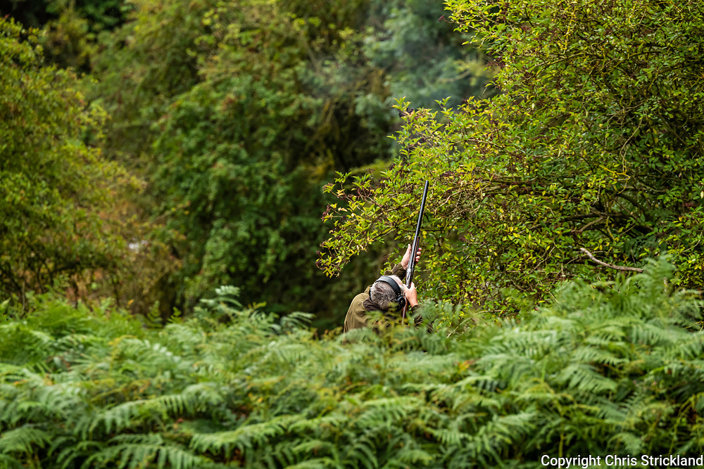 Crailing, Kelso, Scottish Borders, Scotland, UK. 18th September 2021. A shooting party enjoys a days driven partridge shooting in valleys of woodland near Kelso in the Scottish Borders. The Partridge season runs from the 1st September to the 1st February in Britain.