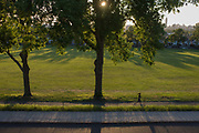 Jogger runs under 100 year-old ash trees in a park in the south London borough of Lambeth. An aerial view from a height opposite towards late sunshine. The lone woman runner paces across the landscape with a view across the capital. Her long shadow reaches across the road and railings.