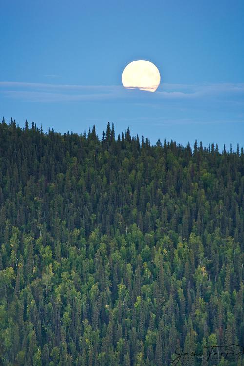 Full moon  near Midnight Dome overlooking Dawson City, Yukon Territory, Canada