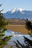 Mount Cheam is reflected in the Harrison River