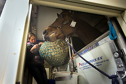 Martin Fuch's, (SUI), SG Future in his flying stall<br /> Departure of the horses to the World Cup Finals in Las Vegas from Schiphol - Amsterdam 2015.<br />  © Hippo Foto - Dirk Caremans