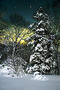 Moonlight Cedar/Snow<br /> ©2001 Jeff Becker <br /> All Rights Reserved<br /> 5 Cedar Hill Road<br /> Easton, CT 06612<br /> 203.261.9765<br /> 203.526.4059