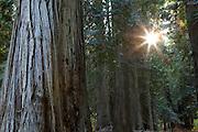 Ross Creek Cedars, Montana