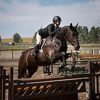 000 No Number Bay Horse