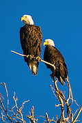 Eagles, Montana.