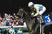 Breeders' Cup Dirt Mile (Race 5) (Dirt) <br /> November 3, 2018: Isotherm and jockey Giovanni Franco gallop past the finish in the Breeders' Cup Dirt Mile on Breeders' Cup World Championship Saturday at Churchill Downs on November 3, 2018 in Louisville, Kentucky.