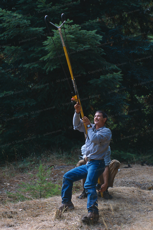 To get a rope into the 320 foot Henry Tree, the first branches of which begin at about 150 feet, Climber Greg Liu uses a Big Shot to launch a lead-filled pouch trailing a fishing line.