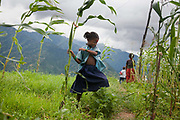 A young girls is running through fields of sweet corn. The Chepangs is an ethnic group which used to be nomadic. Only recently have the settled and their settlements are high up in the mountains. Only a few years ago they did not have any running water and had to bring up water from below but with the help pf Restless Development and their partner NGO Prayash Nepal they now have running clean water from springs diverted into resovoirs and the connected to taps inther settlement. This not only give them clean water to drink, it also improve hygiene dramatiaclly and improve health and it saves precious time for the women who now spend the 4 hours it used to take getting water growing healhty vegetables.