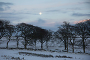 An almost full moon rises over a wintry landscape on 28th of December 2020 in Stow, Scottish Borders, United Kingdom. The few trees up in the hills are barren and black and the white snow almost covers the fields.
