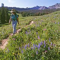 MONTANA, Big Sky. Meredith Wiltsie (MR) hikes amid wildflowers in Beehive Basin below the Spanish Peaks, Gallatin Mountains.