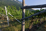 Traditional rack method and vineyards in the wine growing region south-west of Bolzano,, South Tyrol, northern Italy.