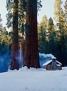 The Grove Museum among Giant Sequoias, Upper Mariposa Grove, Yosemite National Park, California.