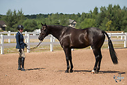 1910 - Equestrian Festival ~ July 31 - August 4