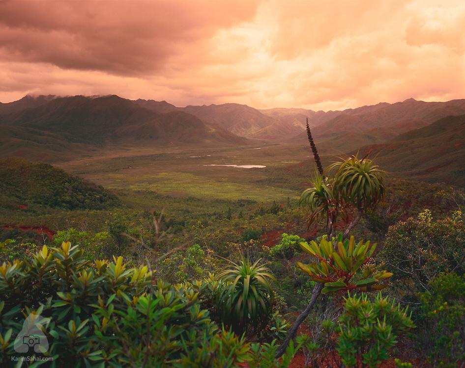 Parc de la Rivière Bleue, Yaté, New Caledonia.