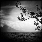 A local boy climbs on a tree before jumping into Lake Atitlan. Santa Cruz la Laguna, Solola, Guatemala. November 22, 2014.