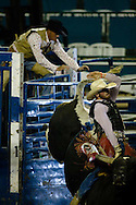 Derek Lacasa, 20, of Tres Pinos, CA leaves the gate on the bull Domino during the PBR rodeo at the Del Mar Fairgrounds in Del Mar, California on July 26th, 2008.  Lacasa rode Domino for 79.5 points.