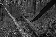 BELGIUM, Brussels. 19/11/2020: Precarious constructions built by children during the Covid-19 pandemic in the Sonian Forest.