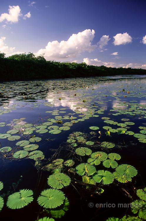 Rainforest landscape: New River near Lamanai.