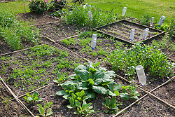 Canes laid on ground to divide plot into sections in order to see where seedlings  have been direct sown into the ground