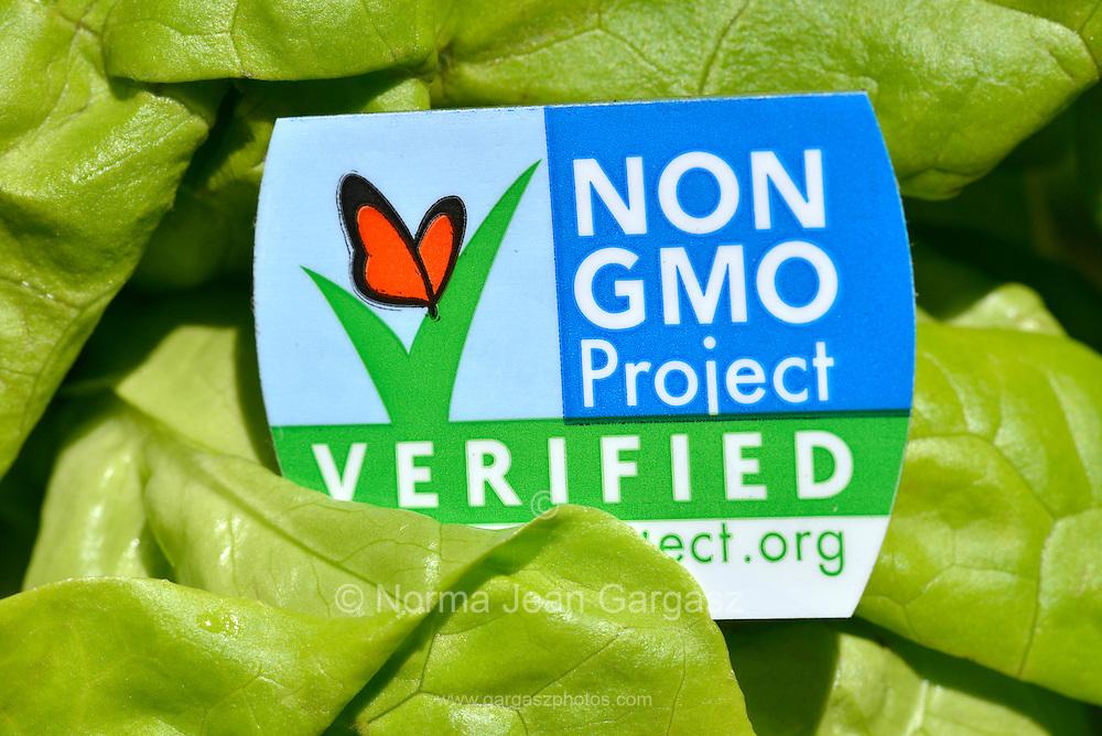 Butter lettuce with a Non GMO label, which indicates Non GMO verification.