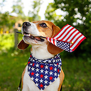 20150623 Fourth of July Dogs