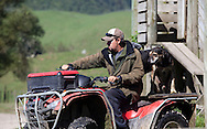 AHUWHENUA TROPHY 2011..Waipapa 9 Station, Taupo..John Cowpland.Alphapix.PO Box 876.Napier.New Zealand..Phone +64 6 8445334.Mobile + 64 272533464..info@alphapix.co.nz..www.alphapix.co.nz..Any images are copyright of Alphapix / John Cowpland..No images may be stored, manipulated, distributed or altered in any way, without written permission or license to do so.