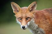 Park Life - Urban Foxes Bristol