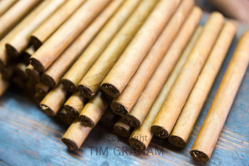 Stack of hand-rolled cigars of long leaf tobacco in traditional cigar factory, Decatur Street, New Orleans, USA