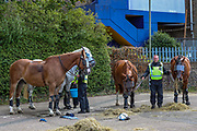 Police Horses are taken care of and loaded back in their truck after they were called to disperse an anti-immigration group of protestors who clashed with police in Dover on Saturday, Sept 5, 2020. At least 100 officers were at the scene on the A20 while protesters block the road and shout 'England 'till I die'. Fears of violence were voiced and local MP Natalie Elphicke pleaded for people to 'stay away' over COVID fears. Several officers were seen restraining one person on the ground before arresting them near Dover Marina. (VXP Photo/ Vudi Xhymshiti)
