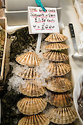 Live scallops in shells on sale four for £6