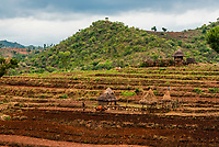 Terrraced farming in the Omo Valley, Ethiopia. Crops are rotated between coffee, sorghum, barley and maize.