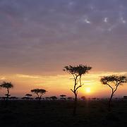 Sunset over the Masai Mara National Reserve in Kenya, Africa.