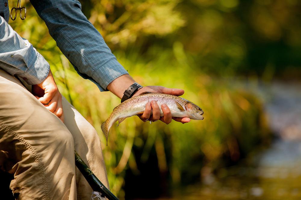 Releasing a Rainbow Trout from a net. Beaver Creek Virginia